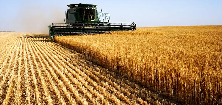 farming-2.jpg